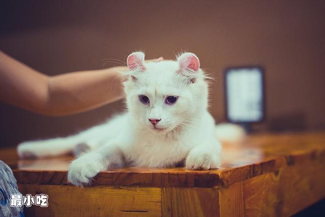 猫控们,喵星人来袭啦!平顶山首家猫咪咖啡馆插图20