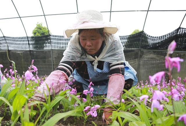 湖北鲜世本草生态农业发展有限公司让您种出更优质的药材-今日股票_股票分析_股票吧