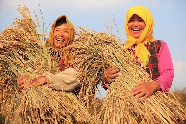 10月粮价大涨,年底能达多少钱一斤?附:玉米、水稻、大豆价格