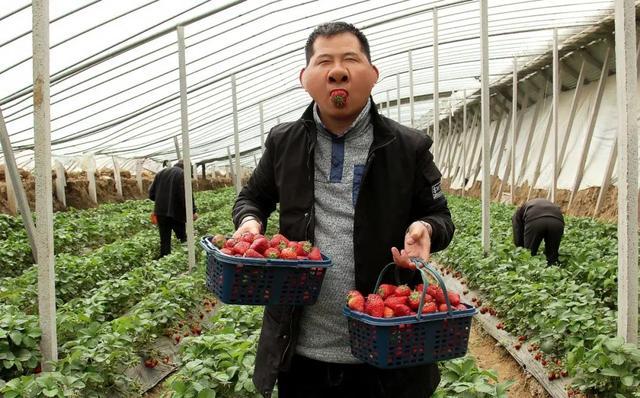 搞事变!平顶山周边嵖岈山狂送草莓!连唐僧师徒都被吸收来了……插图