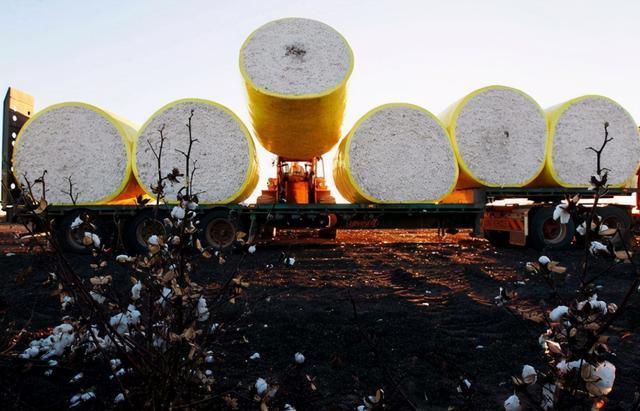 """煤炭之后棉花被禁?澳农业部要求中国""""澄清"""",否则以后卖给印度"""