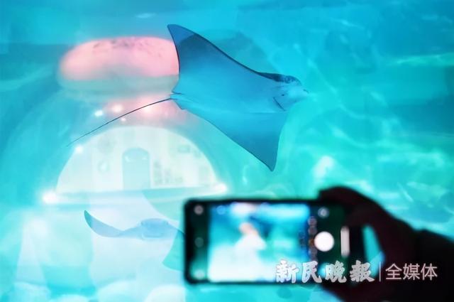 12月29日·上海要闻及抗击肺炎快报插图9