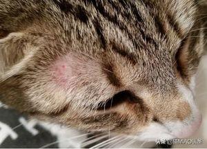 股鳞传染吗,辟谣:猫咪传染病还可以感染人,除了弓形虫之外还有很多,知否