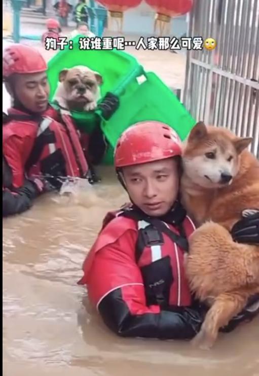 可可爱爱!消防员暴雨中救狗狗一人抱一个www.smxdc.net