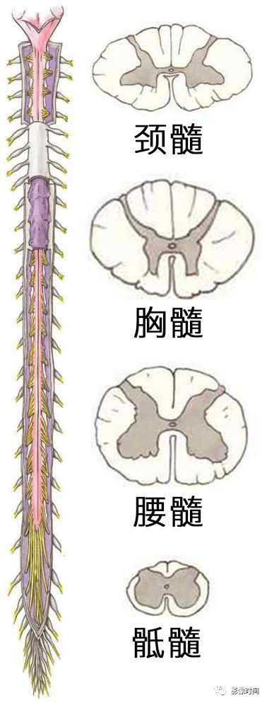 数影影像,干货,17 种脊髓病变影像解读,你 get 了吗
