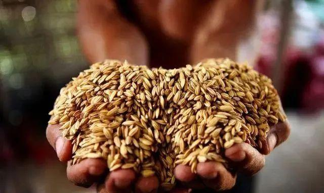 政策:支持农业孵化型项目投资;温氏股份、凤祥股份发力消费市场-今日股票_股票分析_股票吧