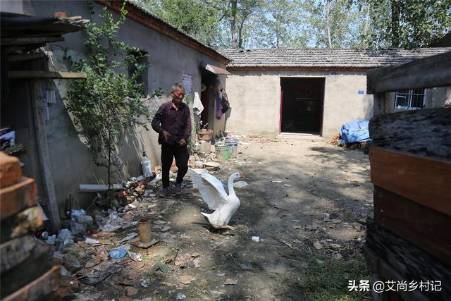 7旬单身老汉把大白鹅当宠物养了16年,背后的原因让人感动【www.smxdc.net】 全球新闻风头榜 第1张