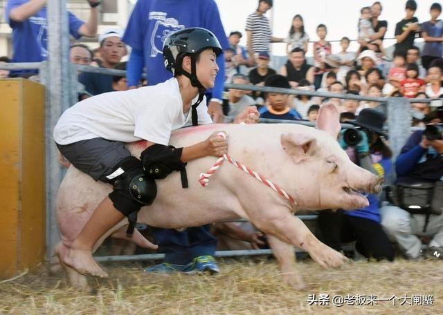 美国终于扛不住了?大批猪肉来华,国内养殖户慌了:我们咋办?