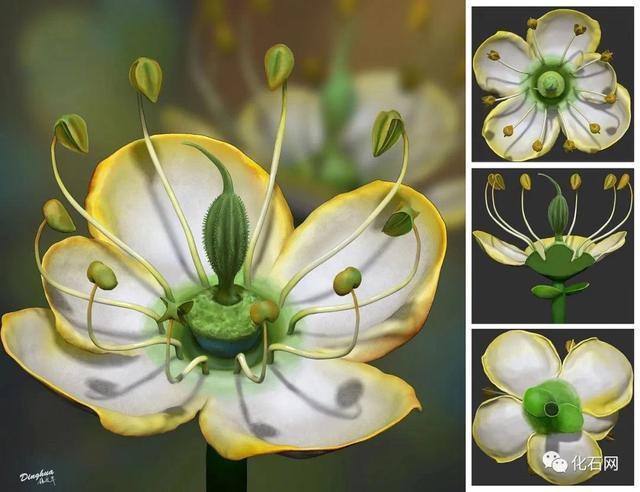 南京古生物学家发现1500万年前奇特花朵,或解开花类演化之谜【www.smxdc.net】