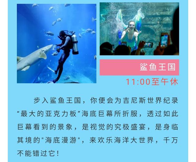 福建一女子在鲨鱼馆潜水时遇难,官方称与鲨鱼无关,已成立调查组