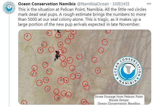 揪心!纳米比亚海岸现7000余头海豹尸体 死因未知