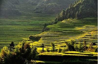 狗股脑茶,遂川县:区县概况0021,盛产狗牯脑茶和板鸭