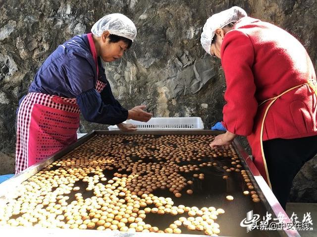 宁国:一家龙头企业带动一条产业链