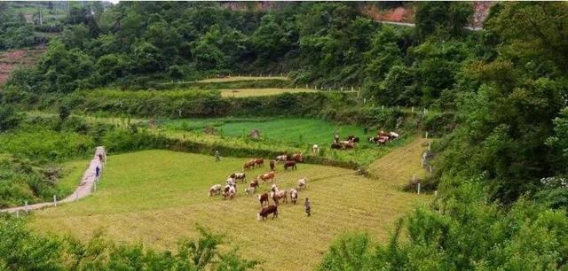 租赁1500亩养地5年,日本人搞的农场最终黯然退场,原因是什么