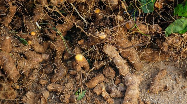 永春碳基肥用实打实效果服人,诚招农业新农人