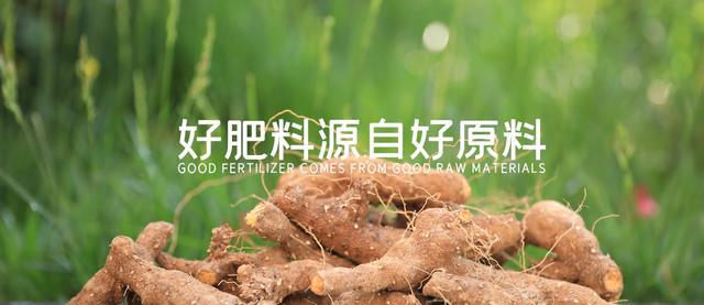 永春碳基肥的神奇之处——选天然黄姜为原料制成