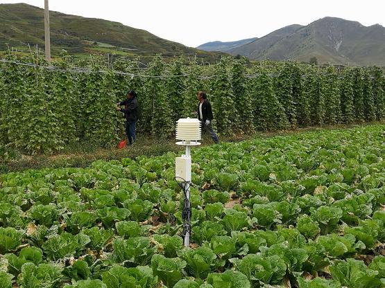 可信农场数字化助力农业产业扶贫