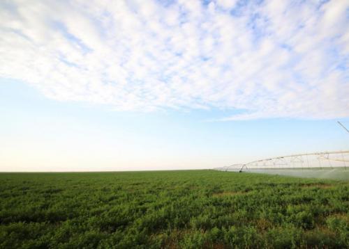 """助力""""中国乳都""""升级版 中国乳业产业园核心区奶源基地建设稳步推进"""