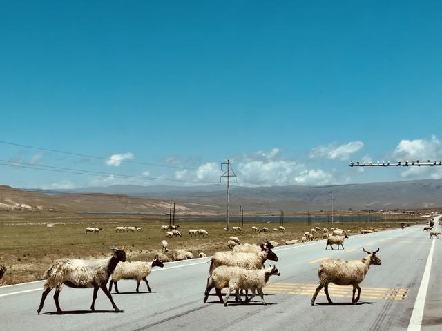 去西藏,行走在甘南川北青藏线的24日自助游