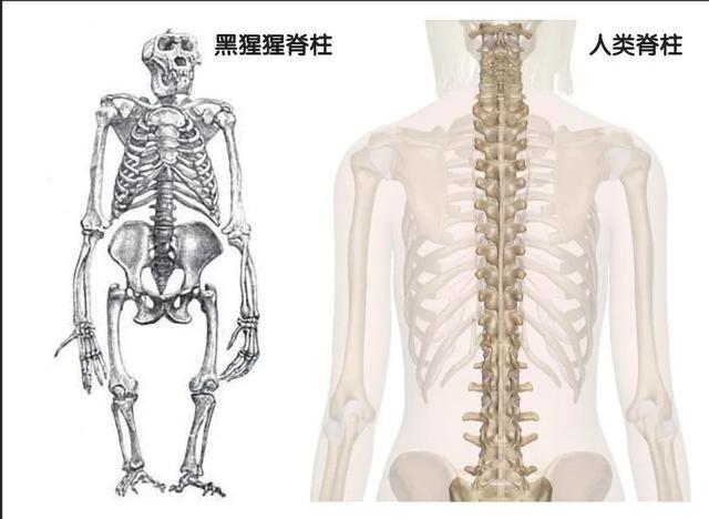 完美人体,你想象不到的模样