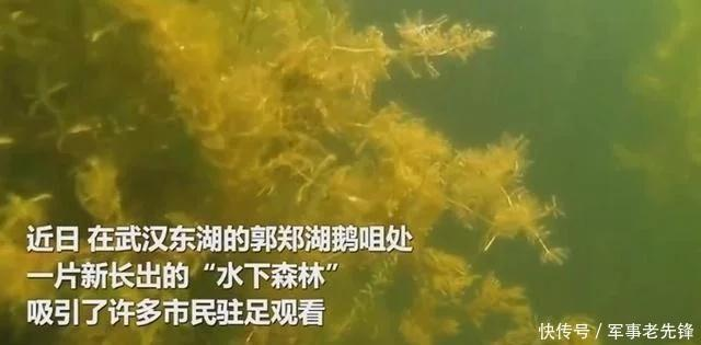 武汉东湖现水下森林,吸引市民驻足 之眼转一圈13分14秒