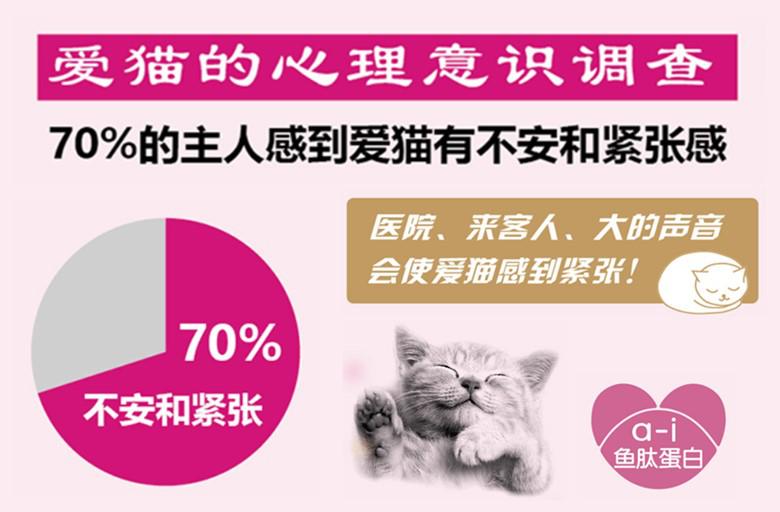 来自日本的养猫法则