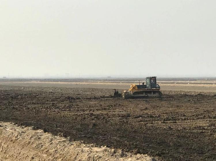 营口市将打造盐碱地种植新模式